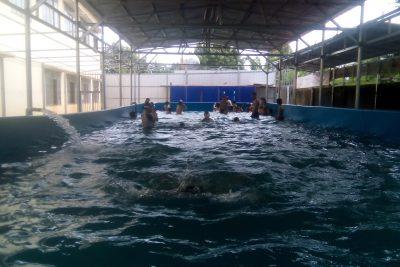 Bể bơi nhà trường